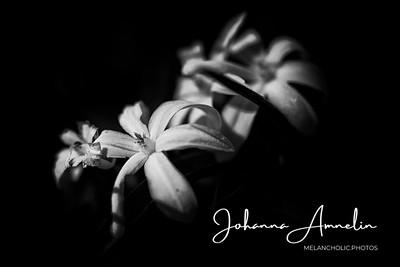 liedon linnavuori kukat makro sisäfilepihvi 065-Edit
