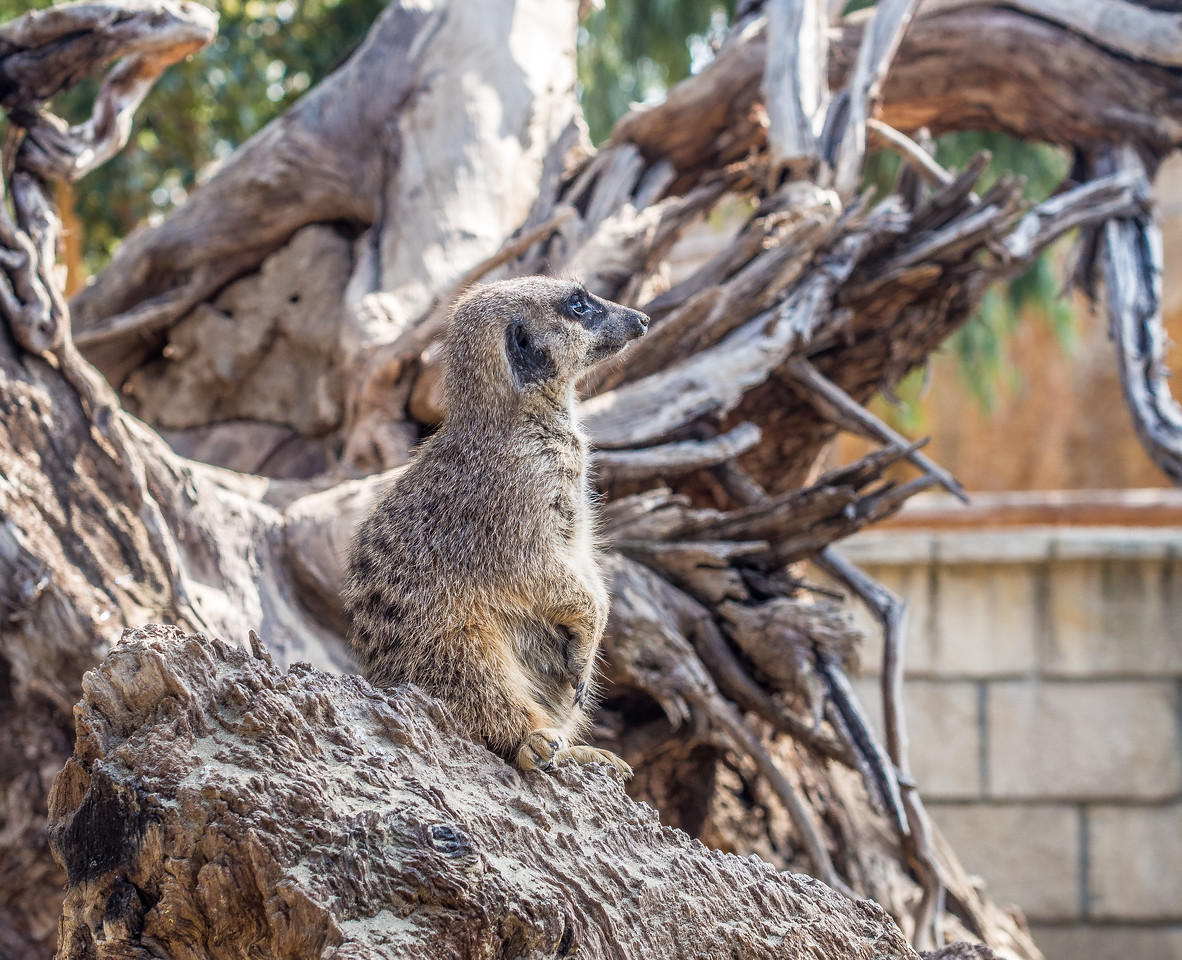 Zoo in Limassol, Cyprus