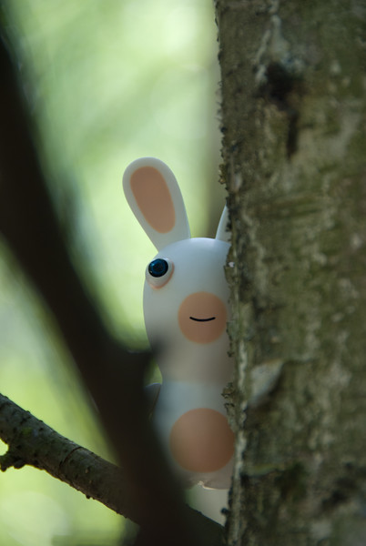 Little rabbid's big adventure