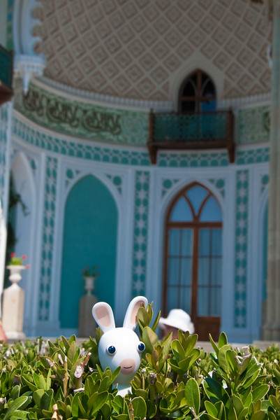 Little rabbid in big palace
