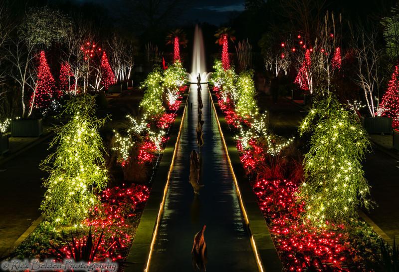 DSBG Christmas Lights-5429