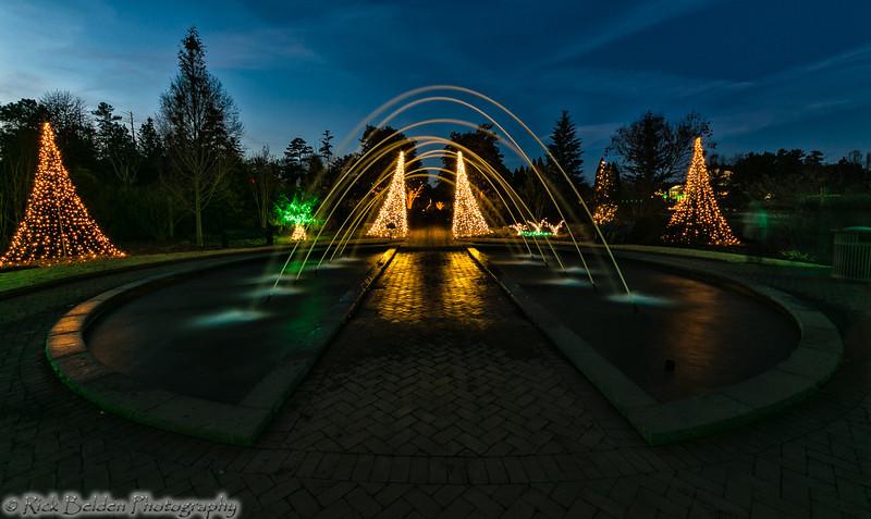 DSBG Christmas Lights-5414