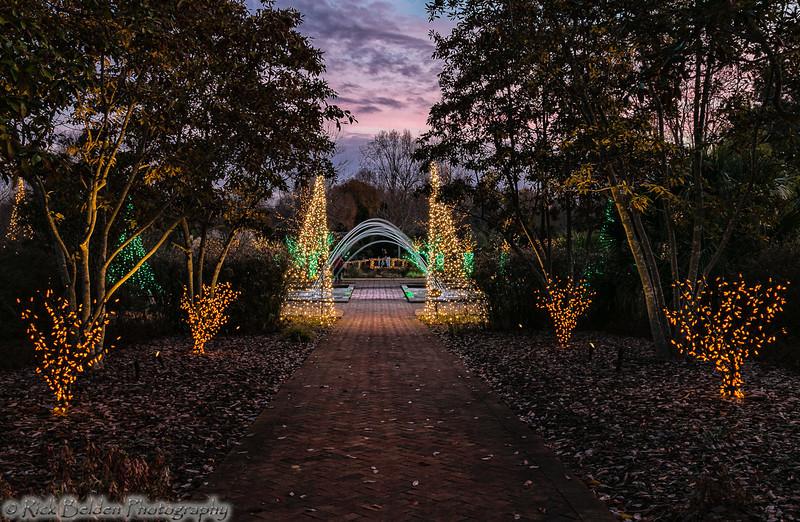 DSBG Christmas Lights-5402
