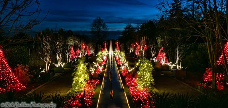 DSBG Christmas Lights-5427