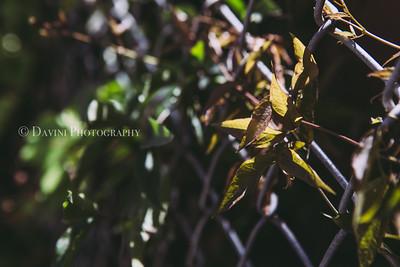 Logan Park/Santa Ana