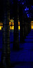 Abstract of trees illuminated with blue light in Jubilee Square - <br /> London, England