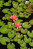 Longwood Gardens 090613-32