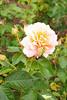 Longwood Gardens 090613-26