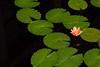 Longwood Gardens 090613-27