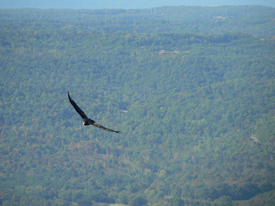 Lookout Mountain - Oct. 15, 2006