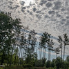 081620.  The sky was great behind these pines.
