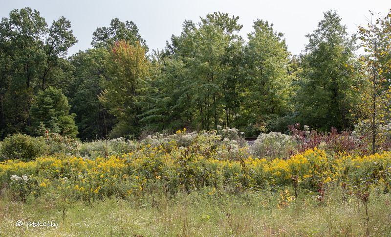 091520.  Mixed wildflowers and early color.