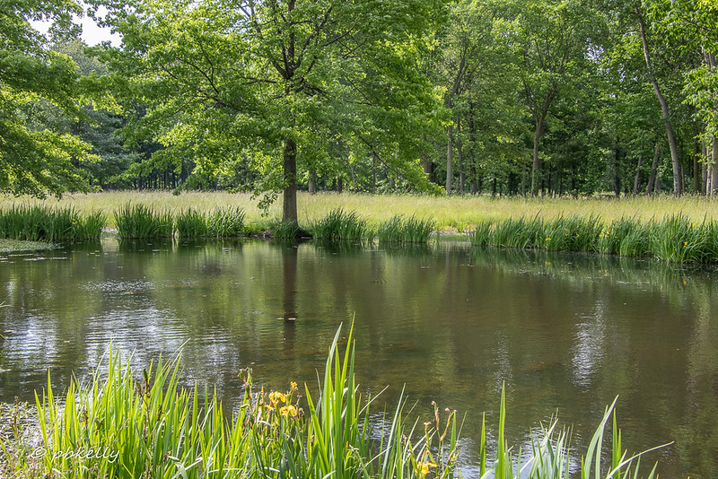 One of the ponds 071419