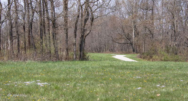 042520.  This meadow has blooming Dandelions and Bluets.