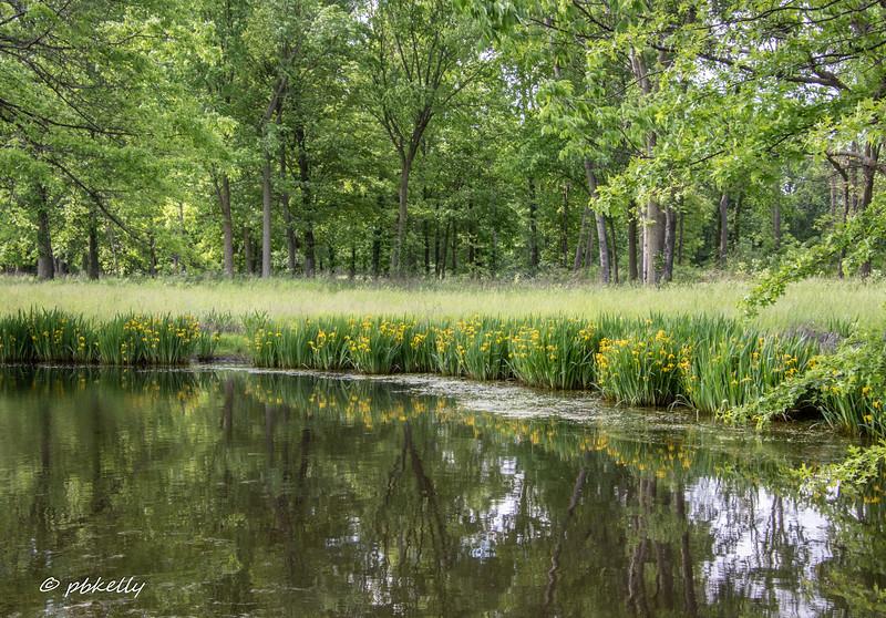 052820.  Same pond.  I liked the reflections.