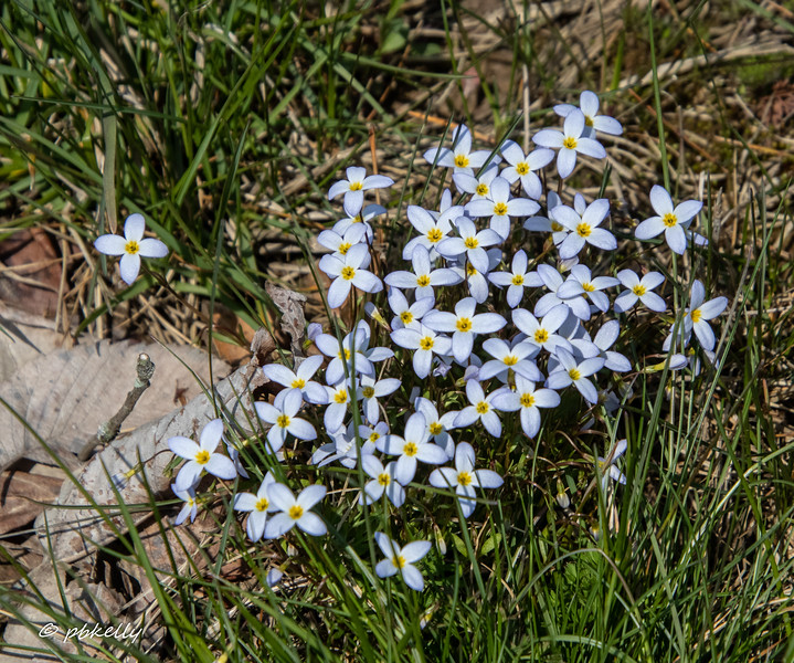 042520.  Closer up on the Bluets