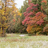 101120.  And more fall color