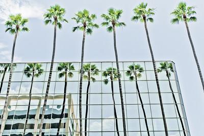 Palms at  Hollywood Blvd