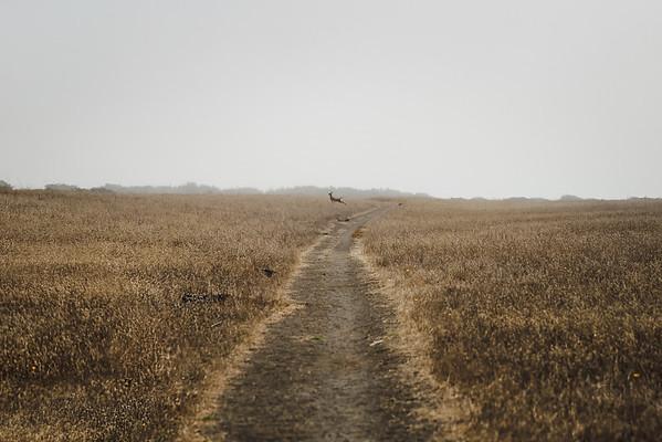 The Wild Path Ahead