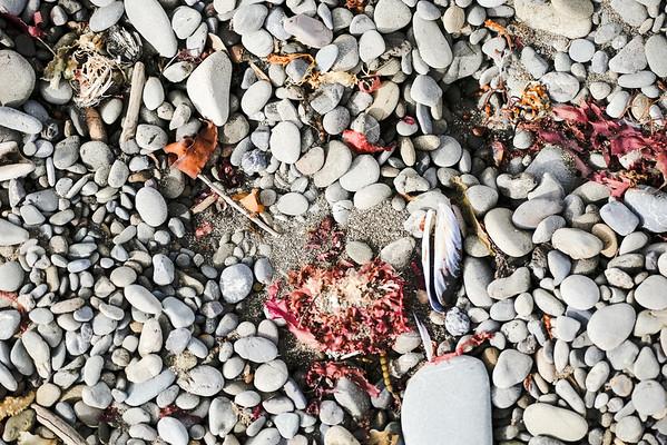 The Beach's Color Palette