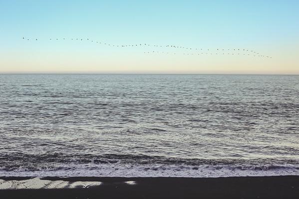 A Long Flock