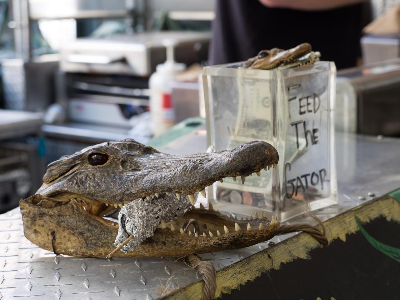 Feed the Gator