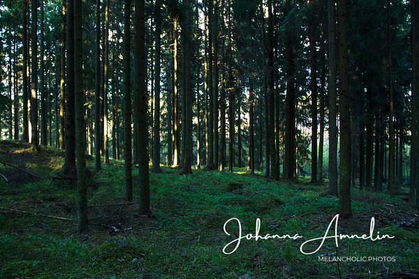 Mäentien metsäpuro Raatala