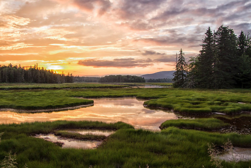 Marshall Brook, Bass Harbor Marsh, Acadia N.P.