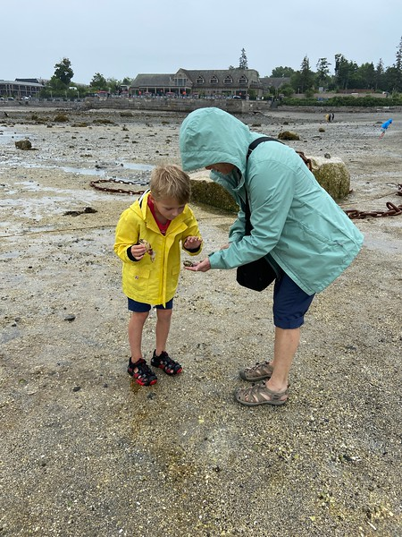 Looking for shells on Bar Island Trail