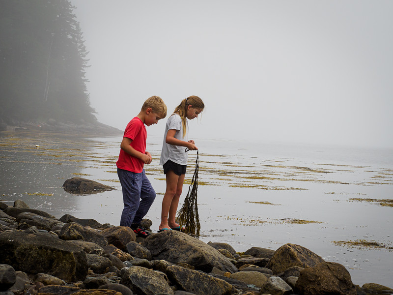 Exploring for rocks and shells