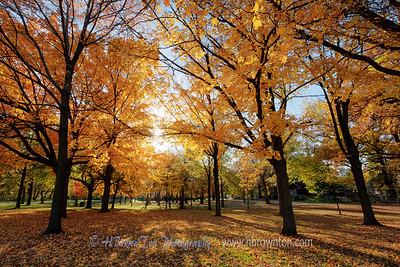 MN Autumn 2014