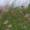 Prairie Smoke Group
