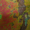 Maple Detail