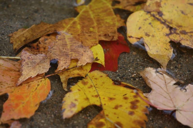 Leaves on river bottom