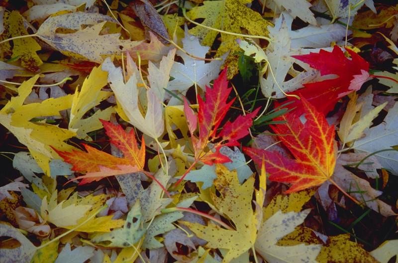 Leaf Color Collage