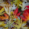Leaf Color Collage