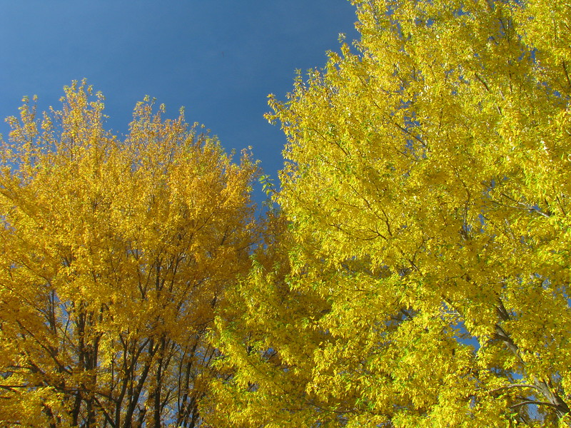 Two Yellows