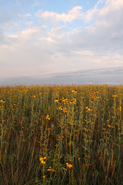 Prairie and Storm clouds