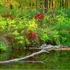 Fall River Scene