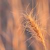 November Prairie