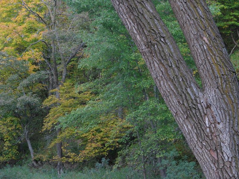 Redwood  River shoreline
