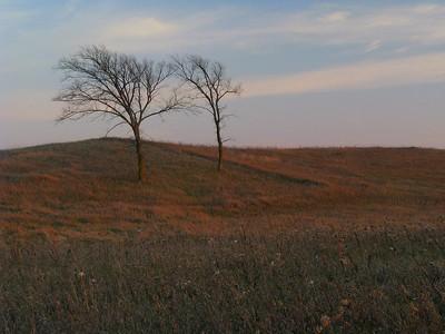 Windswept in the Prairie