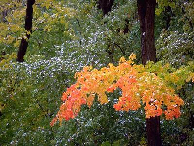 Summer, Fall or Winter?