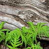 Fern/log detail