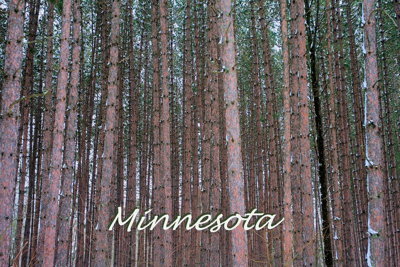 Suomi Hills Pines