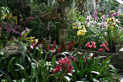 Funchal, Ilha da Madeira - Estufa de orquídeas Madeira Island - Orchid greenhouse