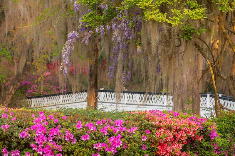 The bridge... Magnolia Gardens March 24, 2019