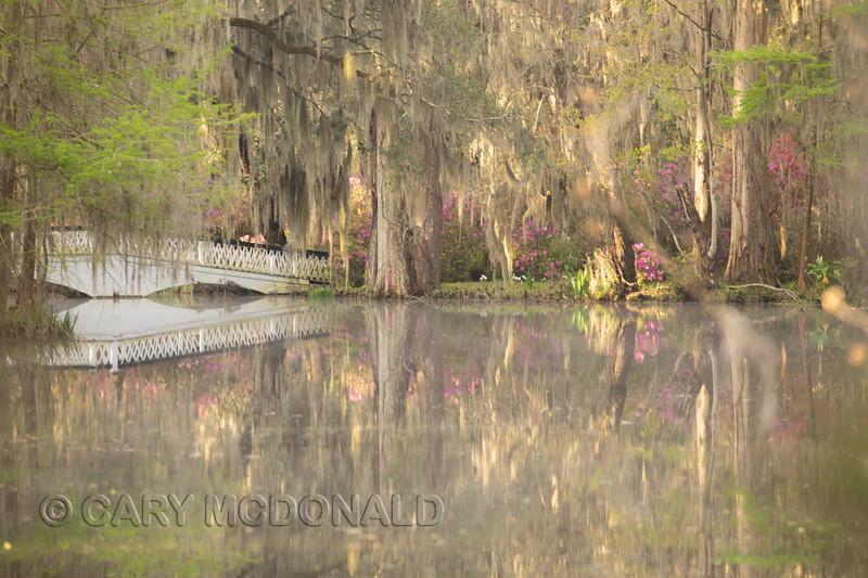 Magnolia Gardens - Pastel Bridge