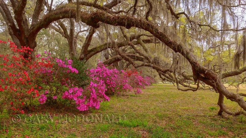 Magnolia Gardens March 24, 2019