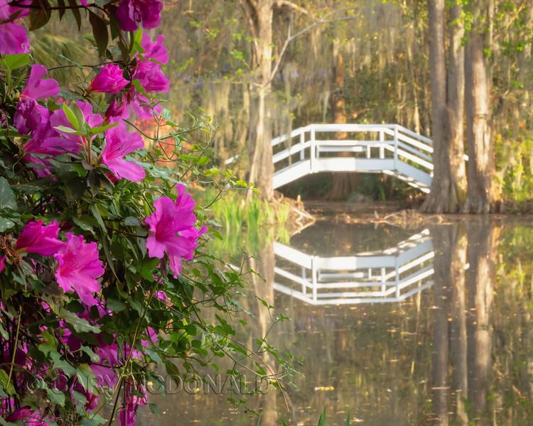 Little Bridge at Magnolia Gardens